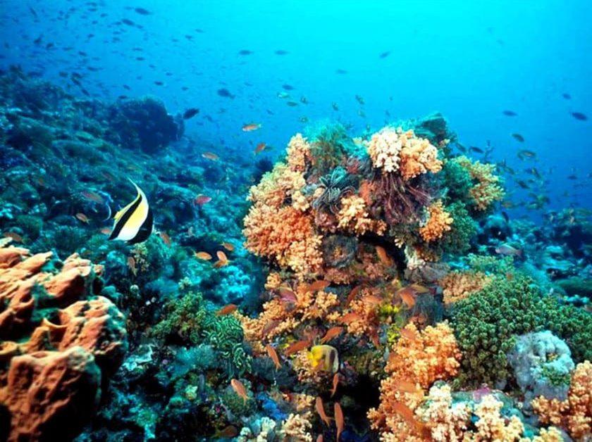 Segunda barrera de coral más grande del mundo
