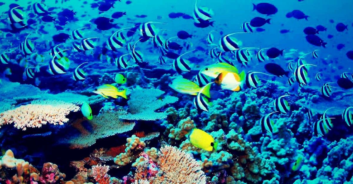 Barrera de arrecife