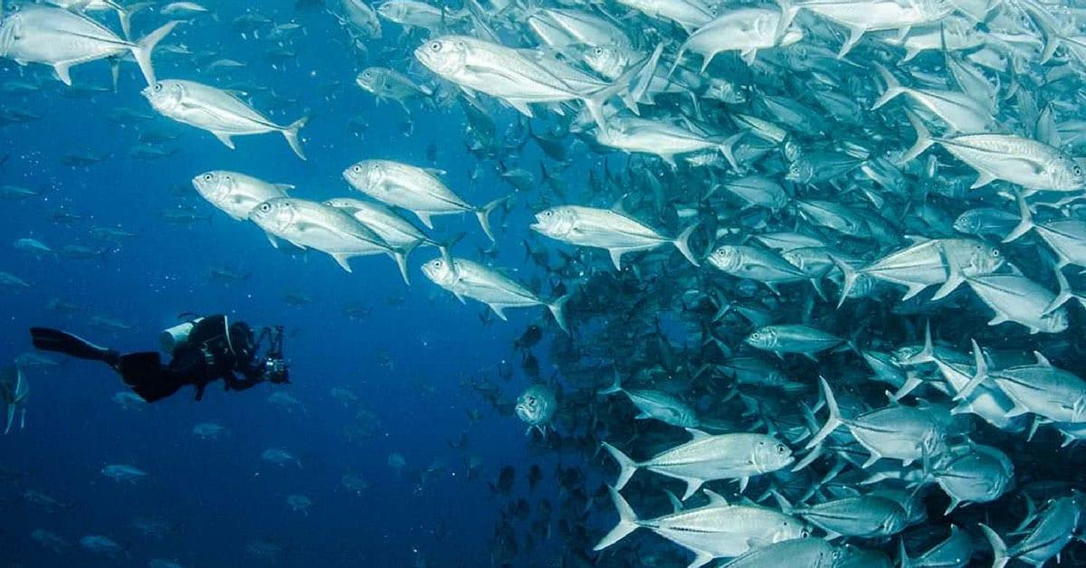Buceo Cabo Pulmo