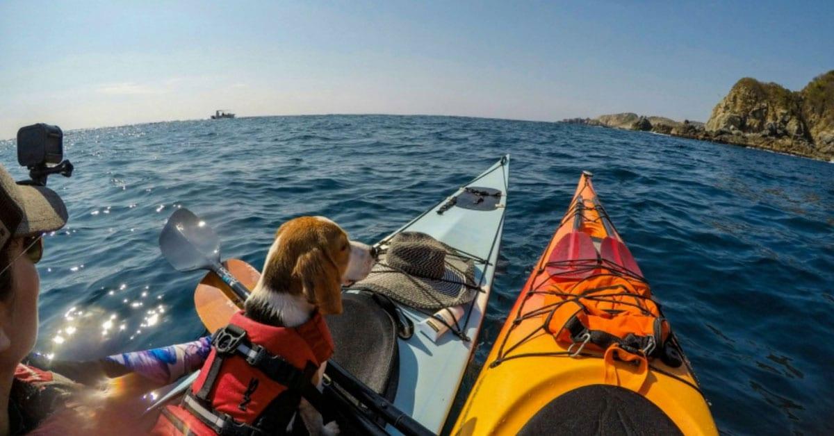 perrito en kayak